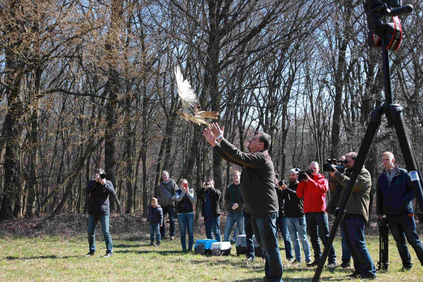 The release of the three birds of prey in nature