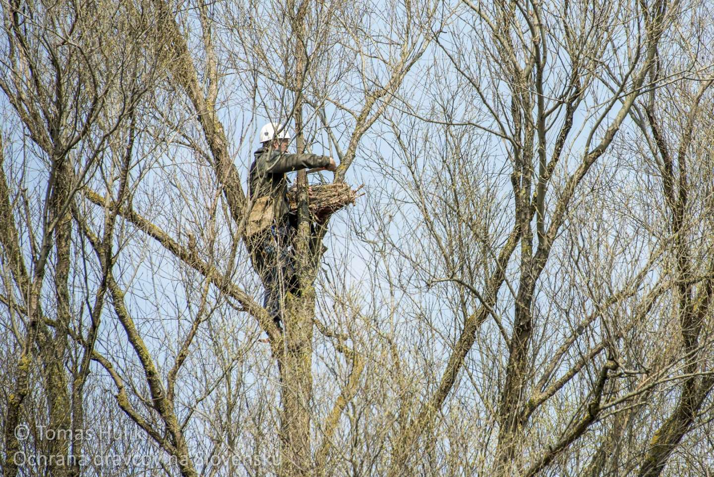 Eagle owl likes artificial nest