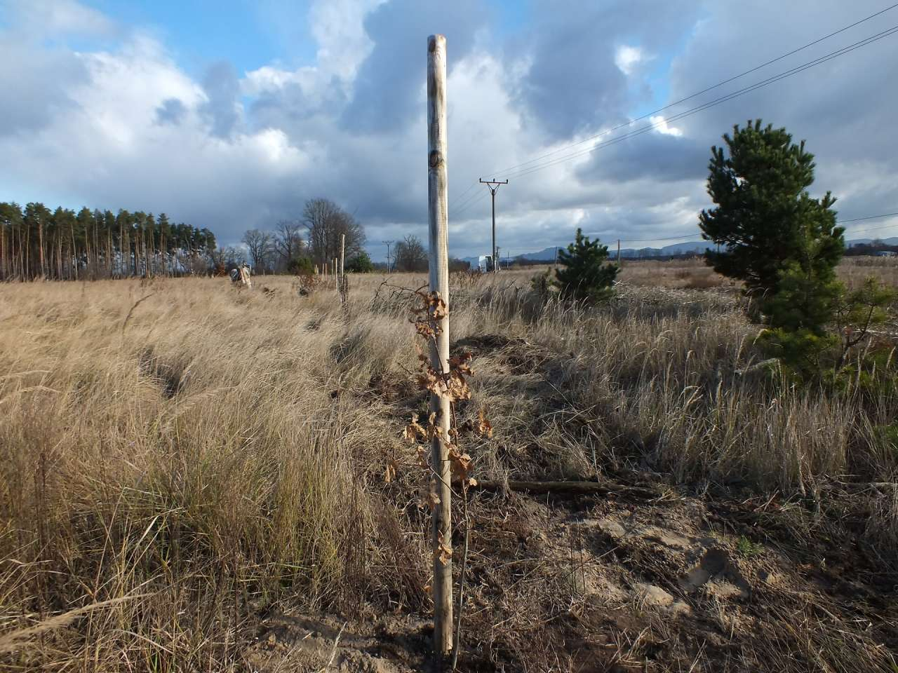 550 trees and 8 000 insulators will protect birds in Slovakia